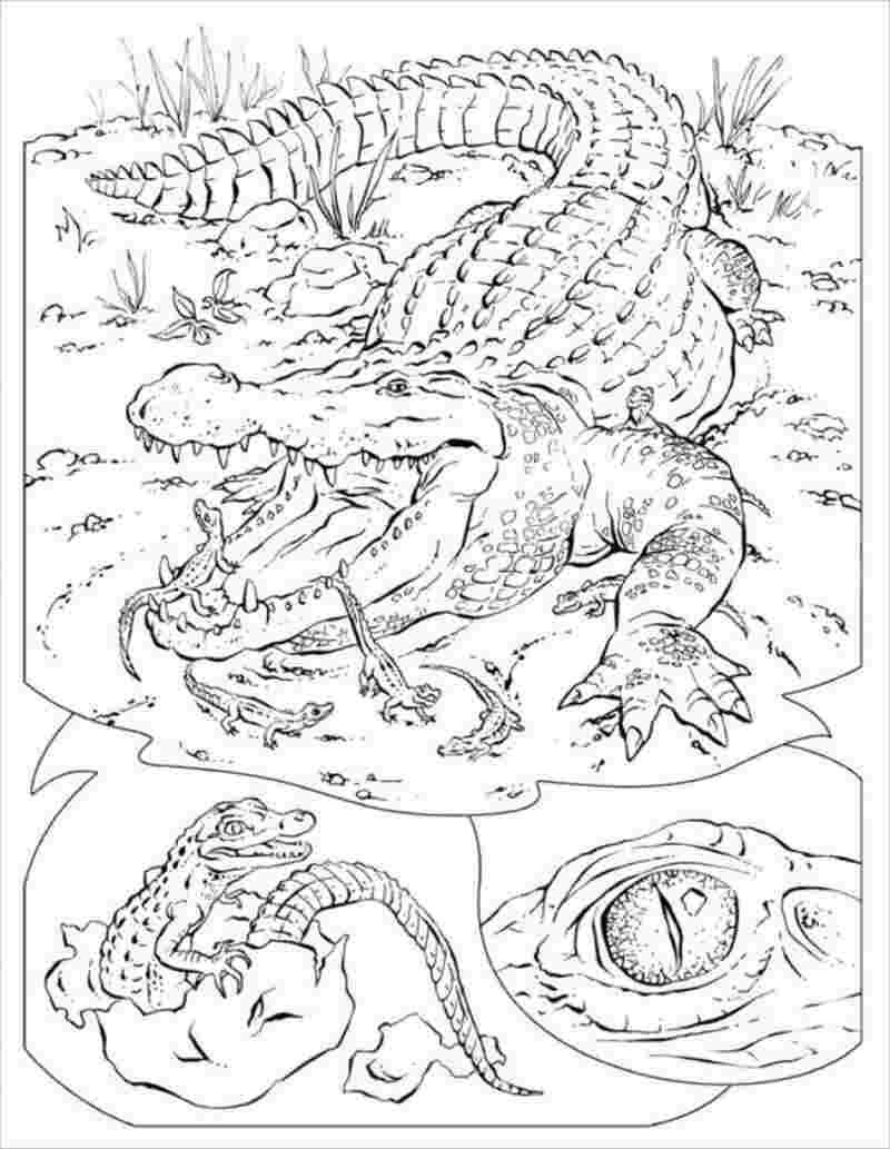 Cá sấu mẹ và những con cá sấu nhỏ xinh