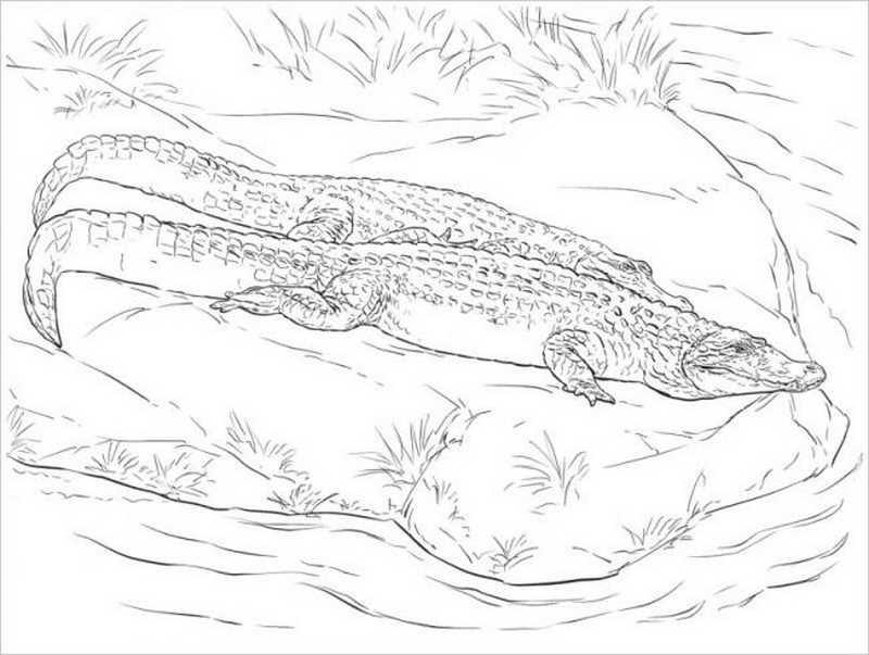Cá sấu vùng đầm lầy