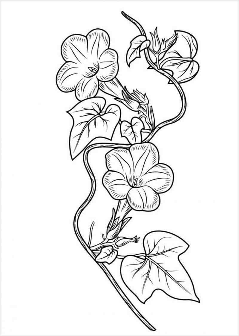 bức vẽ hoa đậu biếc có màu xanh lam đậm mát mắt