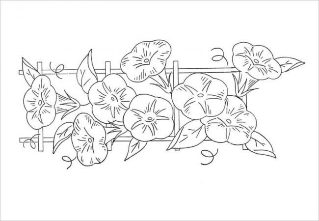 hình cây hoa Hoàng Thảo vàng rực