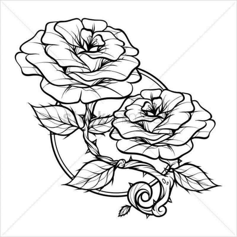 Hình ảnh hoa hồng leo với đa dạng nhiều màu sắc