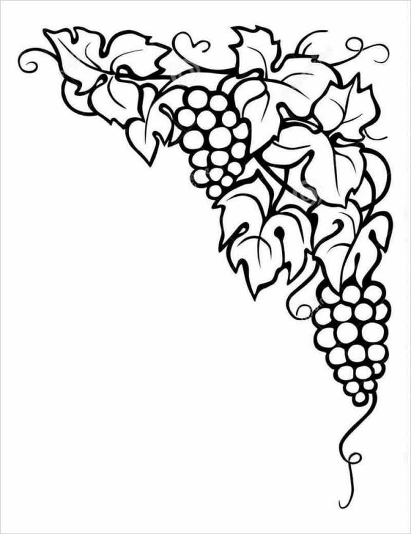 hình vẽ cây nho