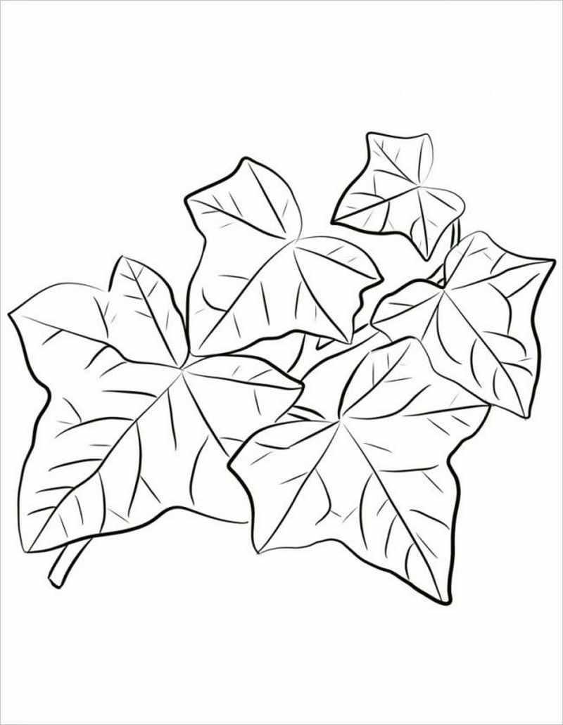 hình vẽ mô tả cây muống nhật