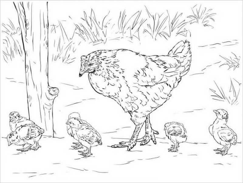 Đàn gà cặm cụi đi tìm ăn trong vườn