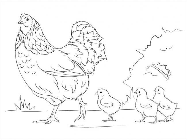 Các chú gà con xếp thẳng hàng đi theo mẹ