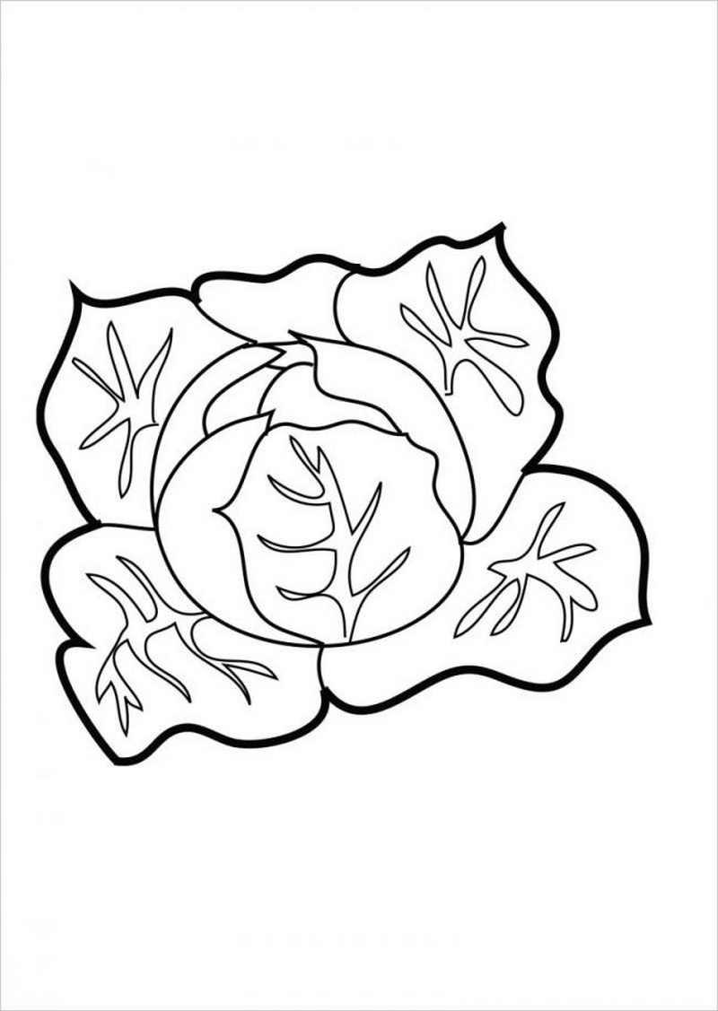 Tranh tô màu hình cây rau bắp cải non