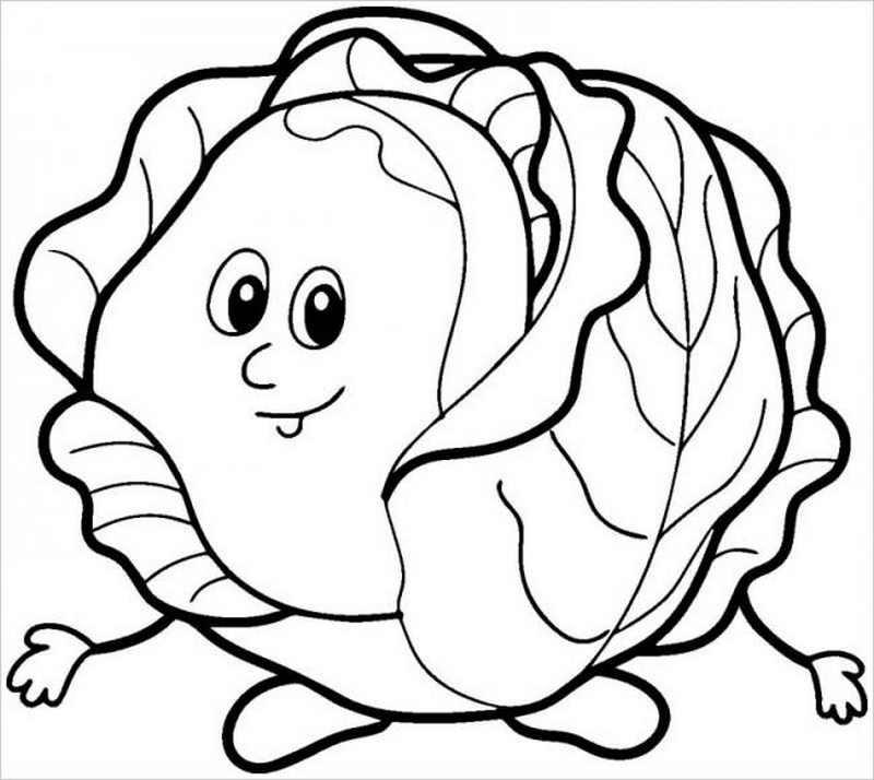 hình vẽ cây cải bắp khi trưởng thành