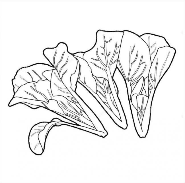 Hình vẽ cây rau cải ngọt