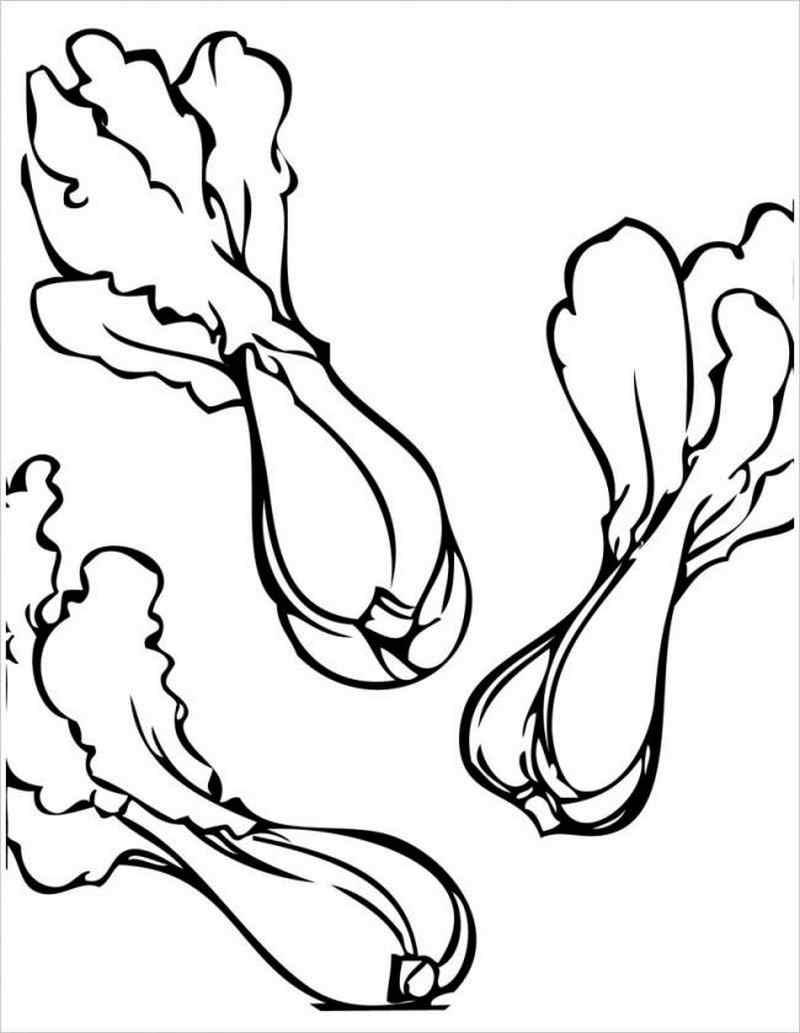 hình cây cải chíp (hay còn gọi là cải bẹ trắng)