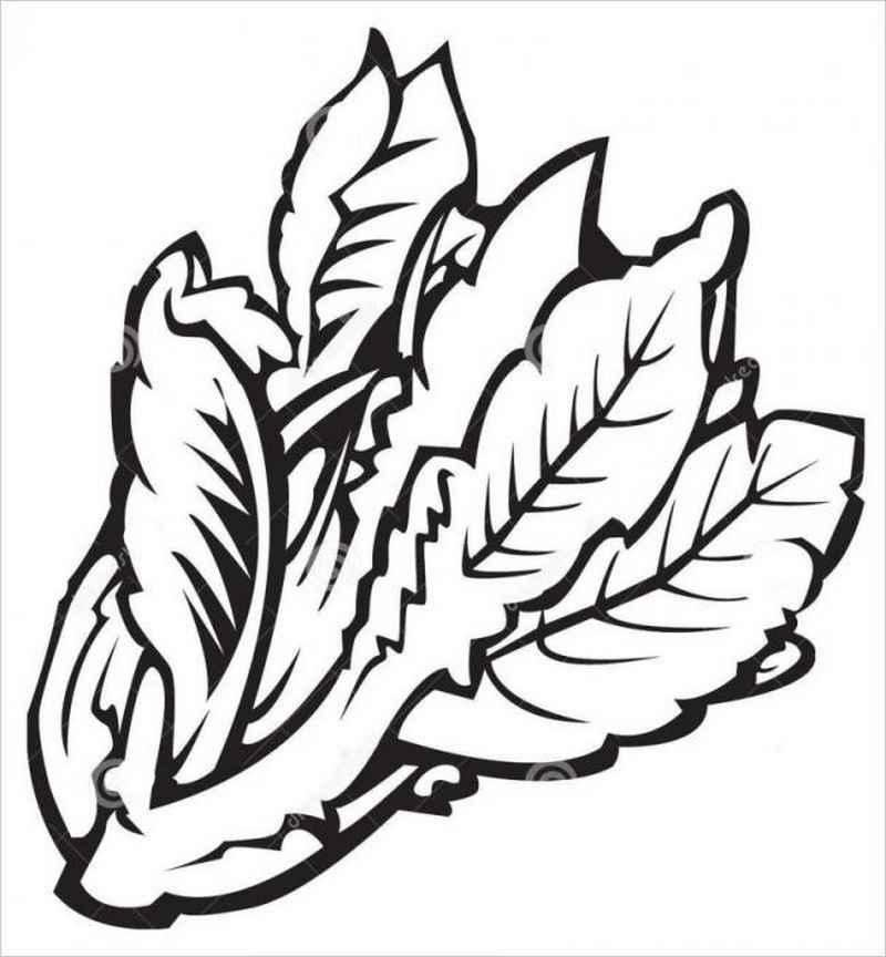 Hình tô màu cho bé hình cây rau diếp