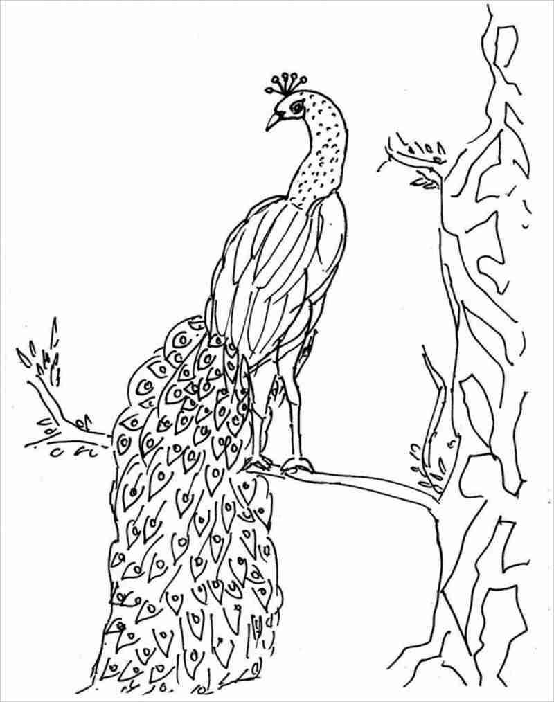Con công đậu trên cành cây