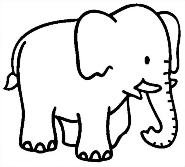 Chú voi với đôi ngà mới nhú