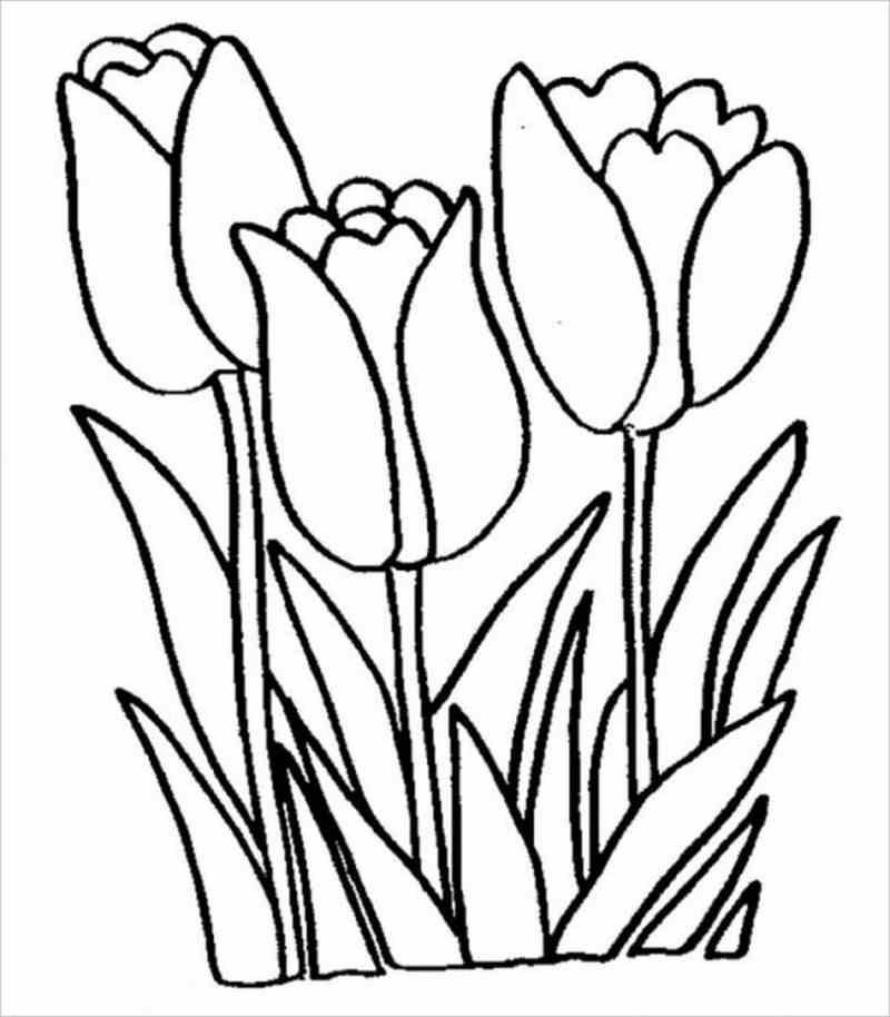 Những cây hoa tulip nhiều đơn sắc đang chờ được khoác áo mới