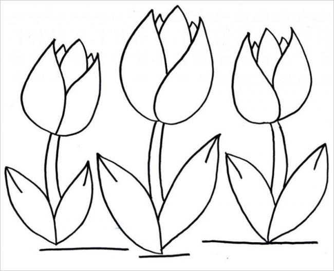 Tranh vẽ cây hoa tulip nhưng chưa được tô màu