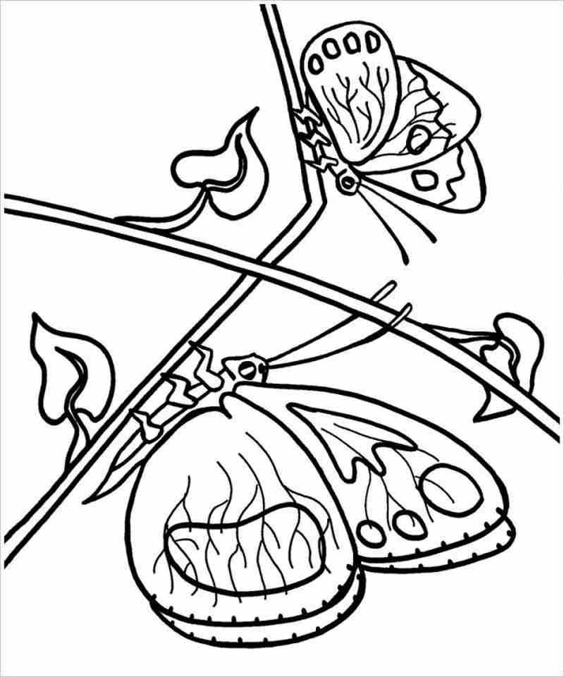 Hình ảnh hai con bướm đậu trên cành cây