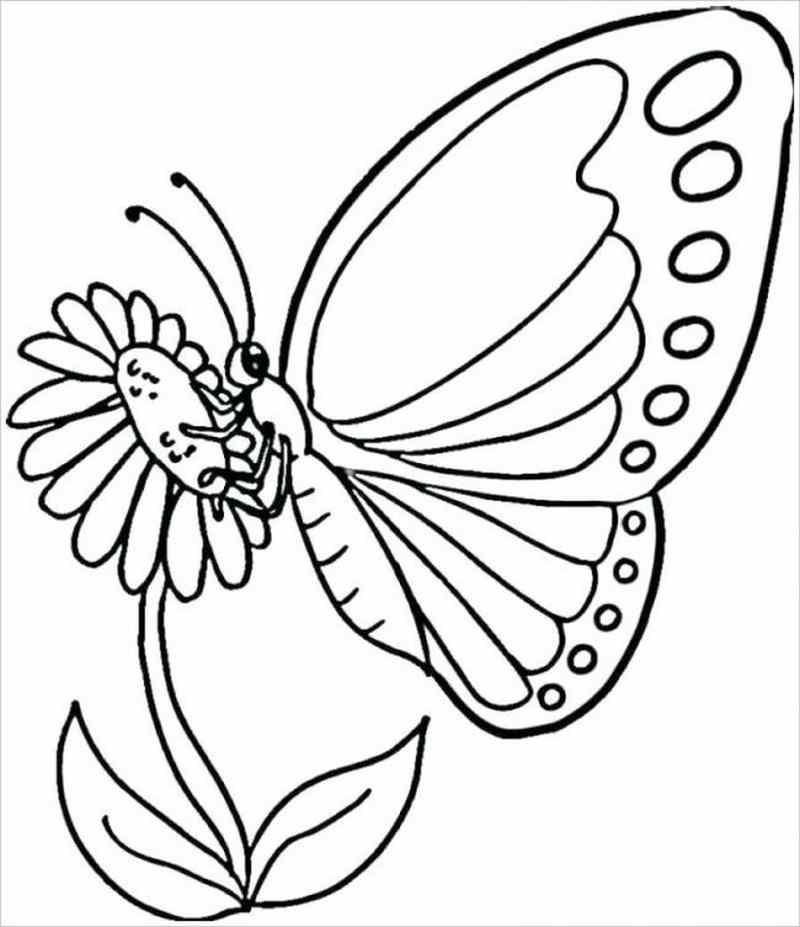 bướm đậu trên bông hoa