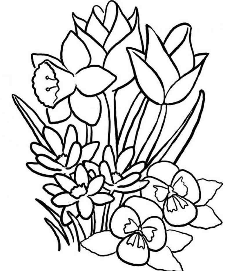 cành hoa lan nhẹ nhàng đón mùa xuân mới về