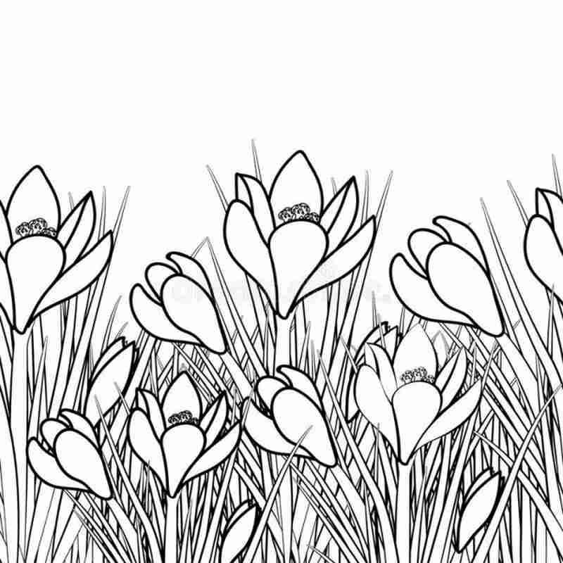 Khóm hoa tulip vươn mình đón nắng sớm