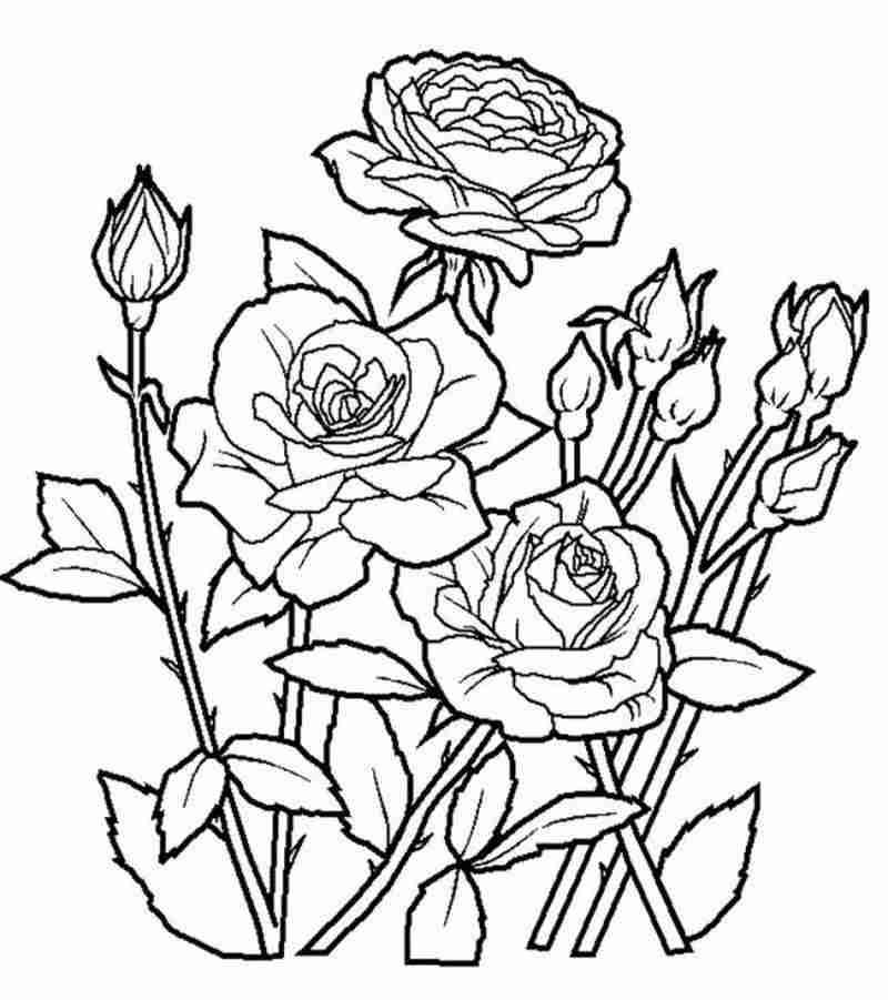 Tranh bó hoa hồng đỏ thắm chờ bé tô màu tặng mẹ