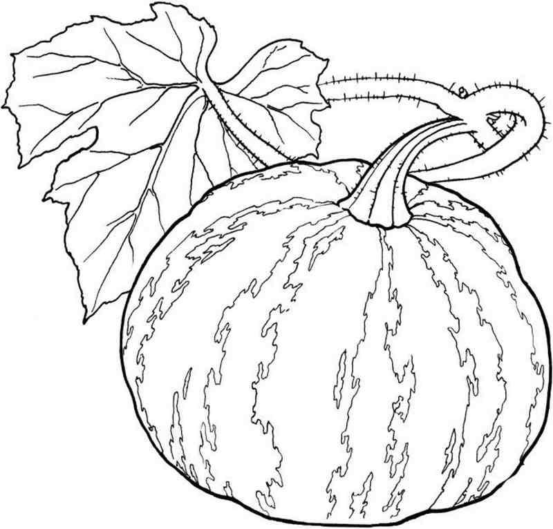 Trái bí ngô to lớn