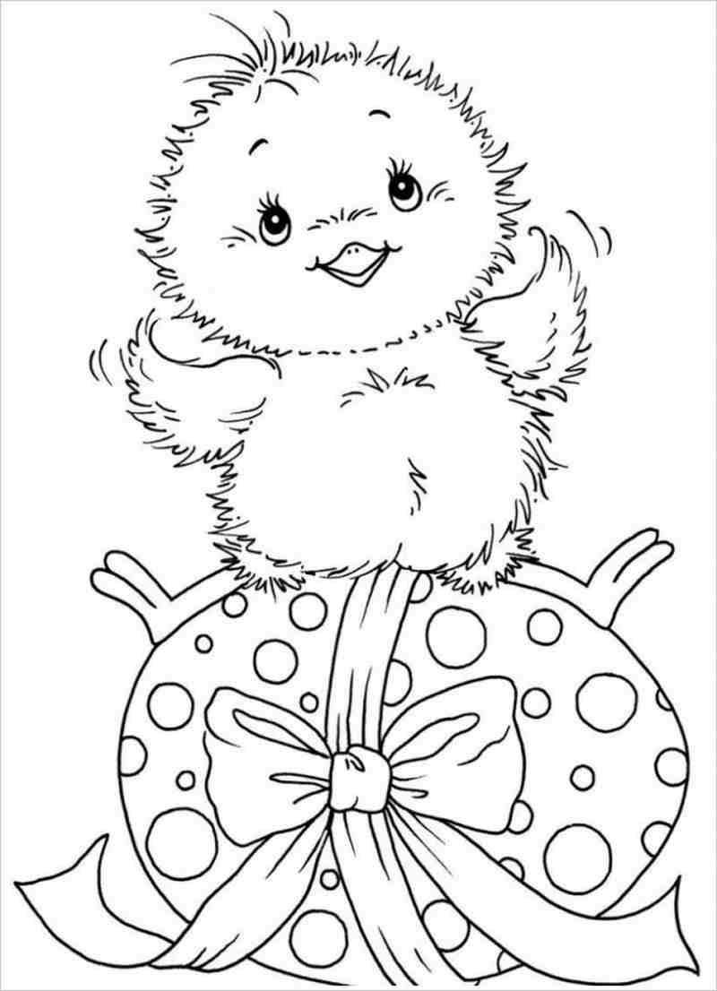 hình ảnh gà ngồi trên quả trứng