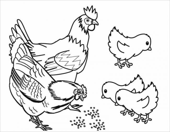 hình ảnh gia đình nhà gà