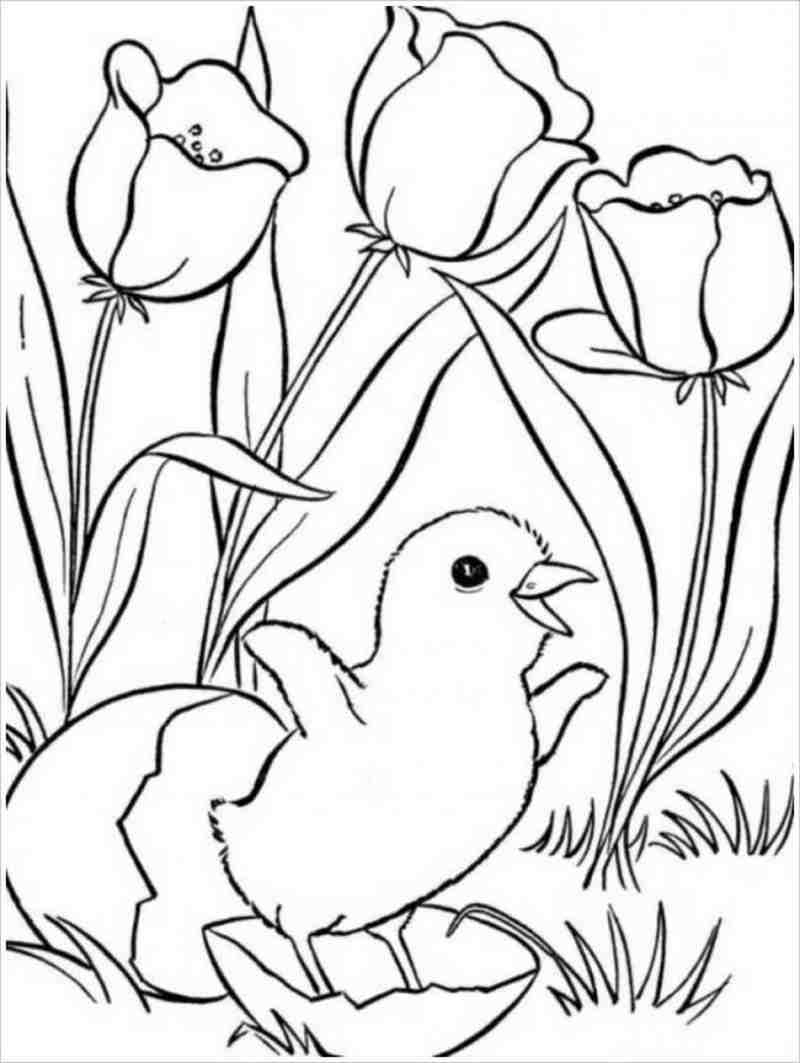 gà con với hoa