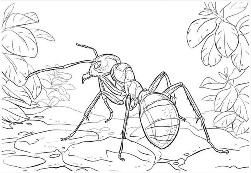 Chú kiến lửa trông thật dữ tợn