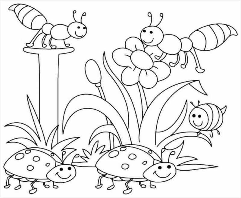 hình ảnh kiến và bọ rùa