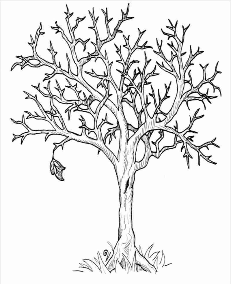 hình ảnh cây trụi lá