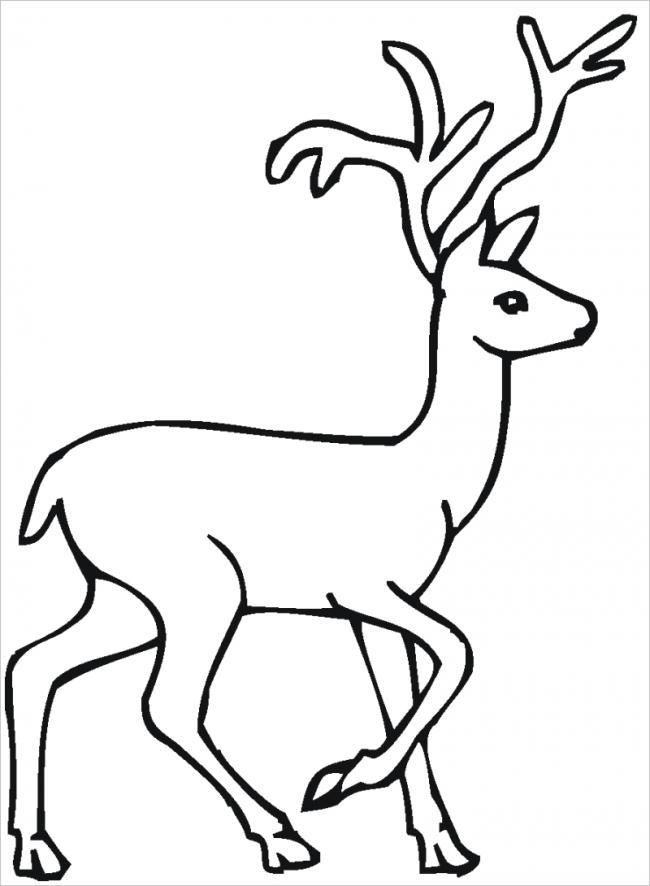 Con nai với bộ sừng dài