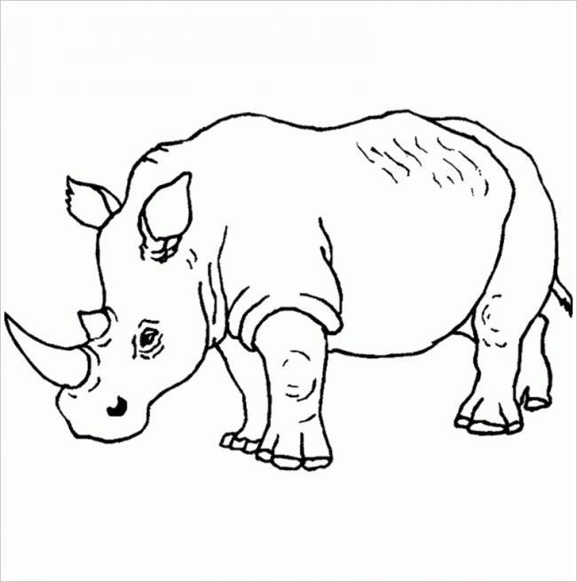 hình ảnh tê giác
