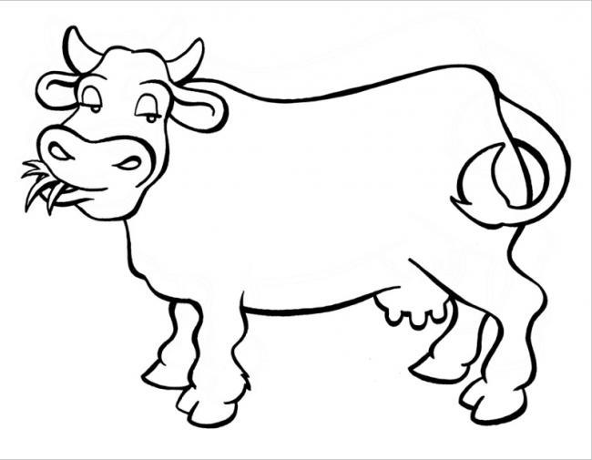 hình chú bò đang nhai cỏ ngon miệng
