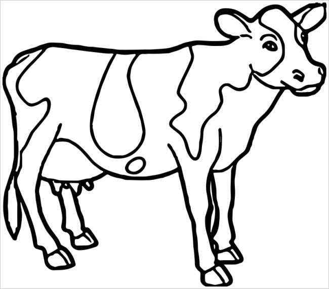 hình ảnh bò sữa