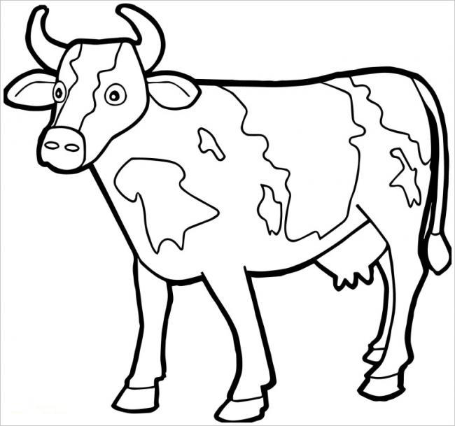Hình ảnh con bò sữa