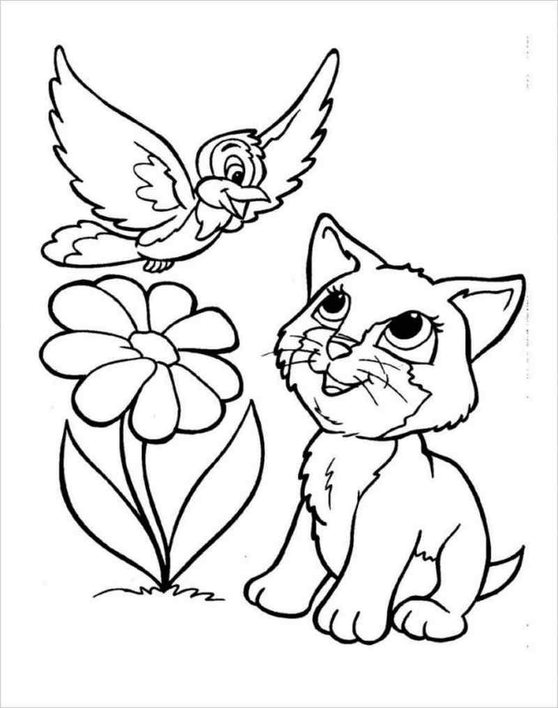 hình ảnh mèo và chim