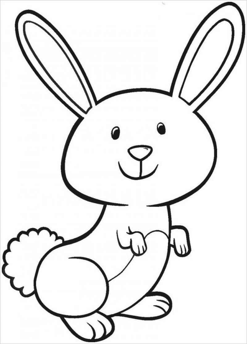 Thỏ hồng có đôi tai dài đáng yêu
