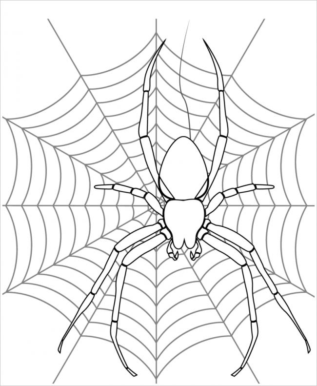 hình ảnh nhện với những chiếc chân dài