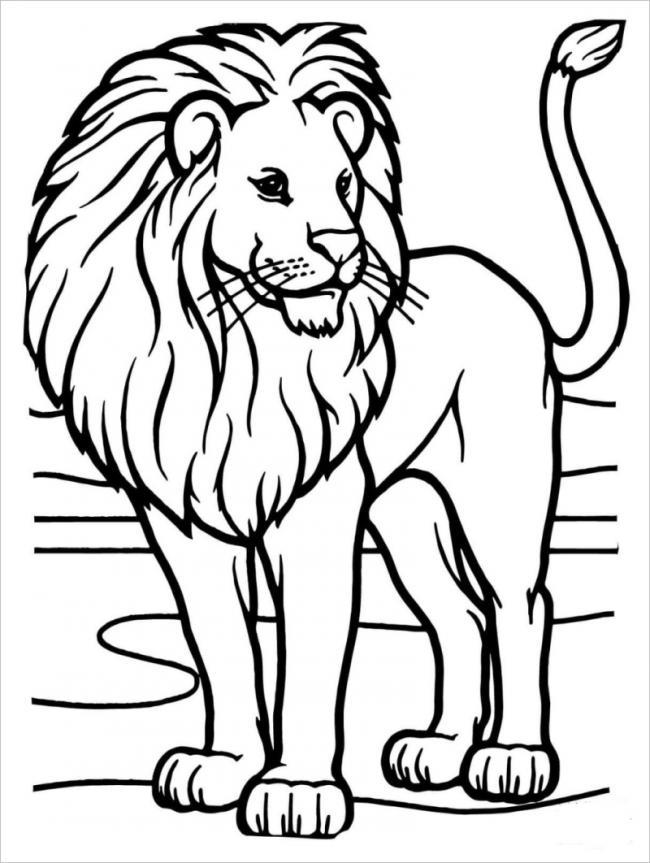hình ảnh sư tử già dũng mãnh, oai nghi