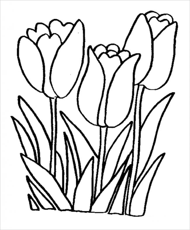 3 bông hoa tulip rực rỡ sắc màu