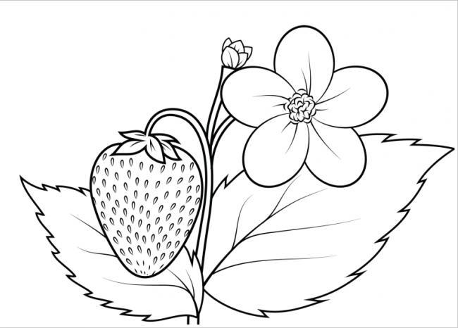 Hình ảnh bông hoa và trái dâu tây