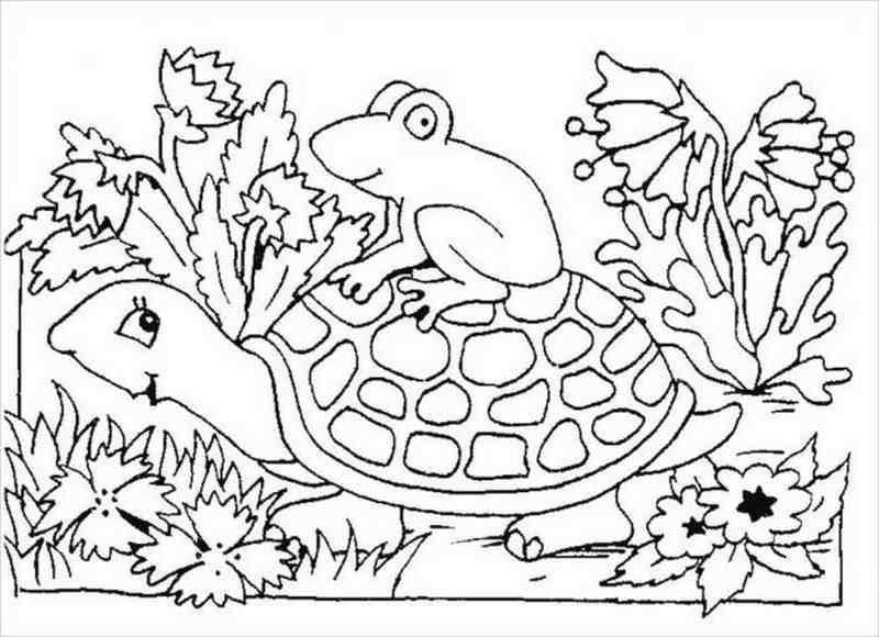 Rùa cõng ếch cốm đi chơi