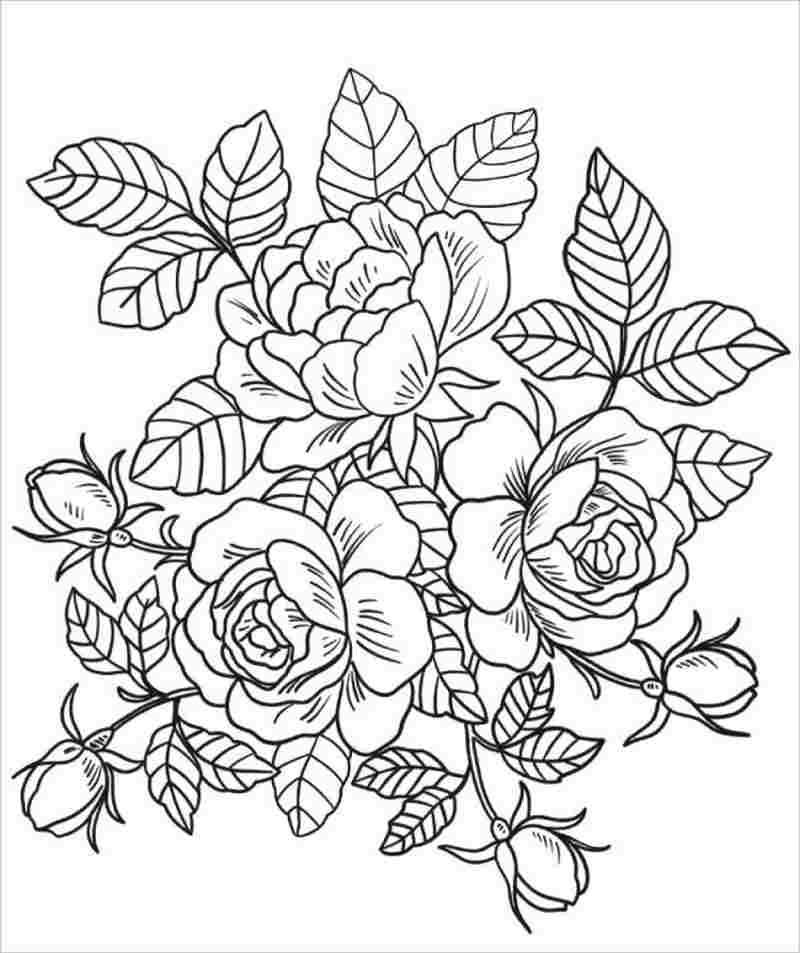 Khóm hồng với những hoa và nụ tươi thắm