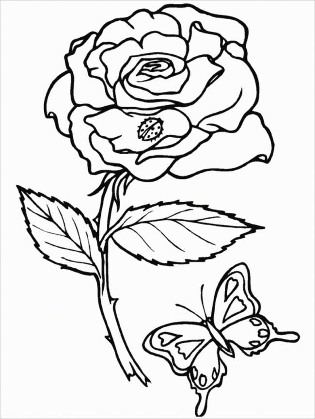 hình ảnh hoa hồng và bướm