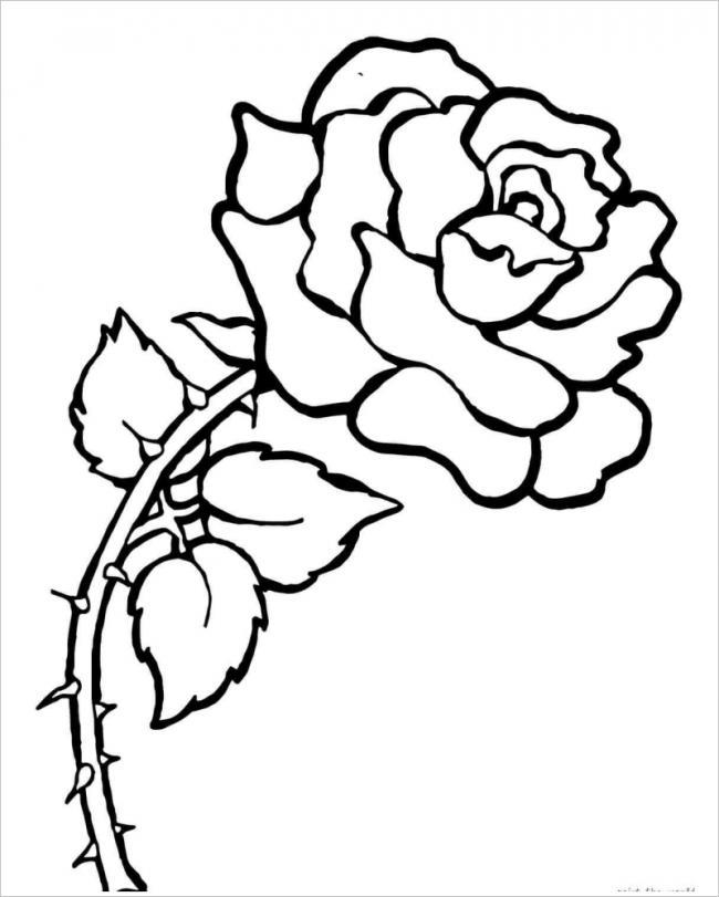 hình ảnh hoa hồng có gai nhọn
