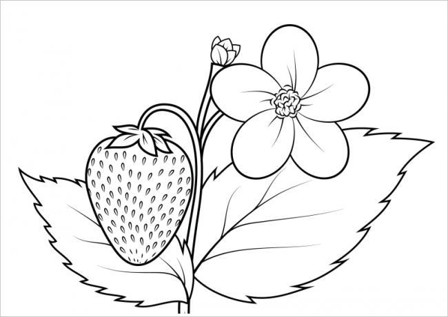 hình ảnh hoa và quả dâu tây