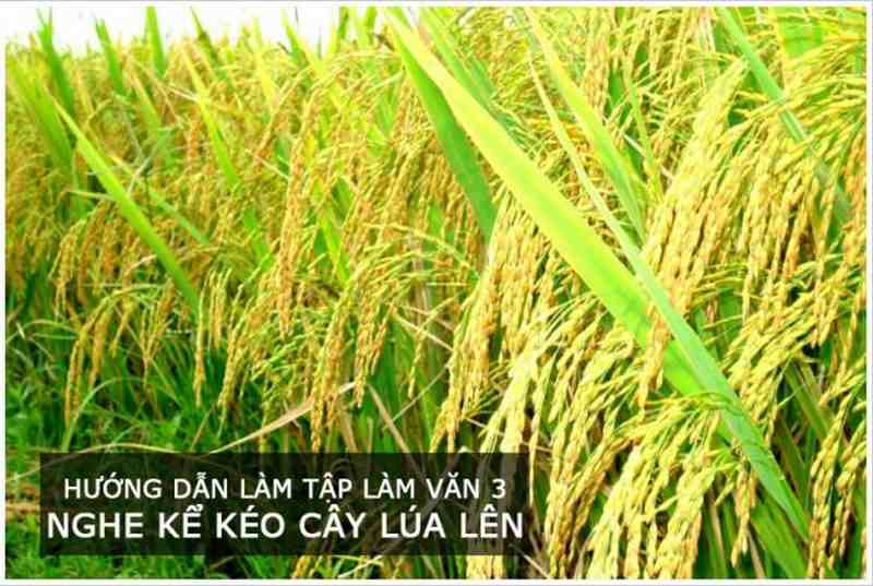Hướng dẫn làm Tập làm văn 3 Nghe kể Kéo cây lúa lên