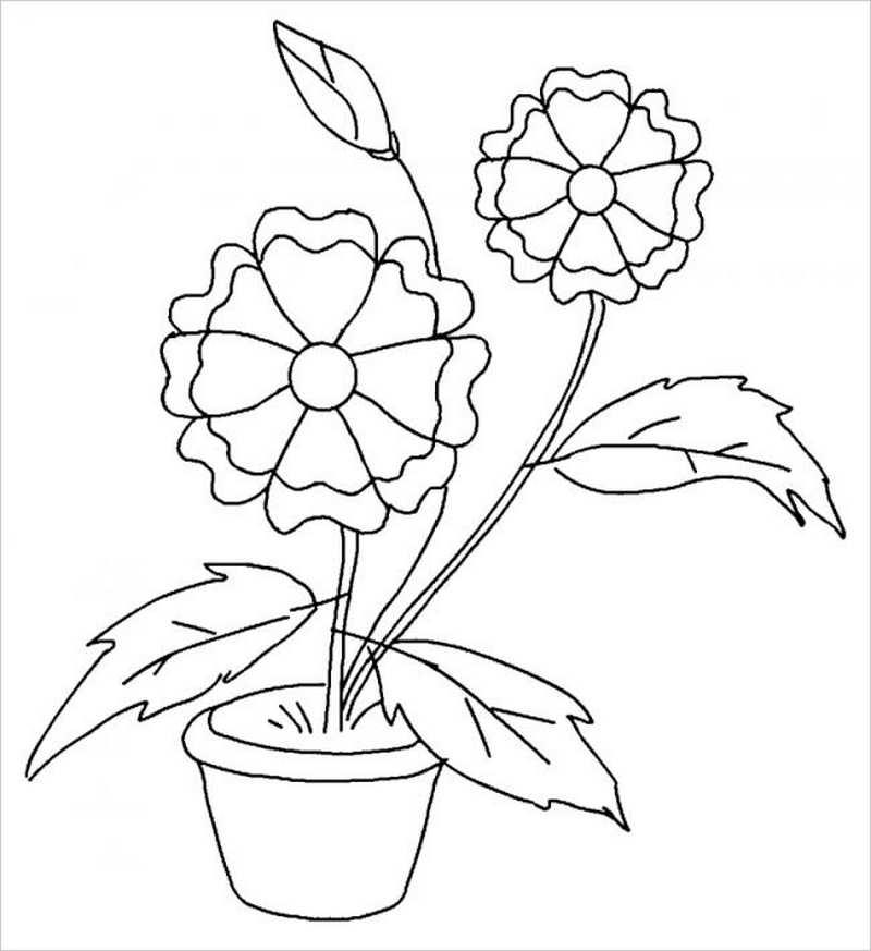 hình ảnh hai bông hoa