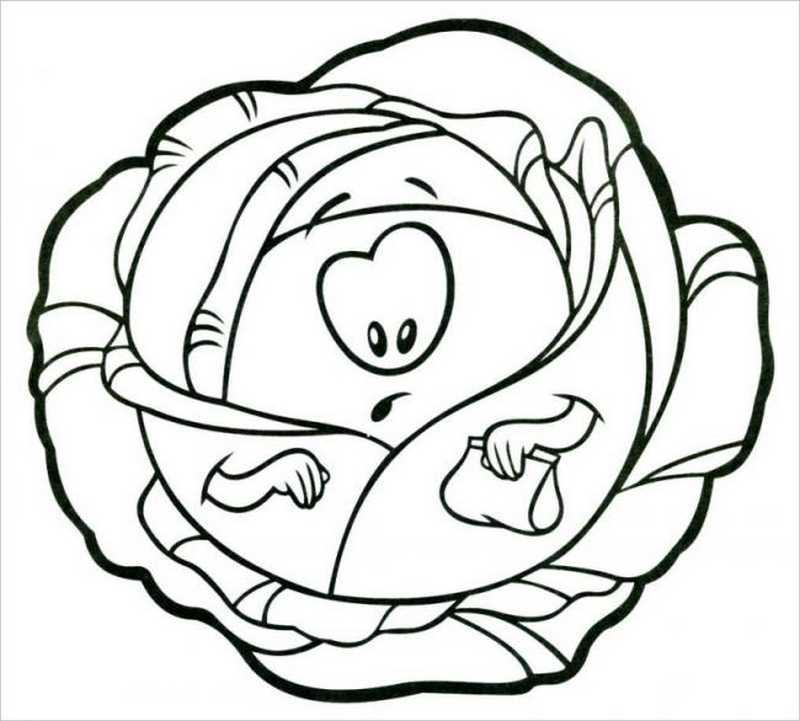 hình ảnh cây cải bắp
