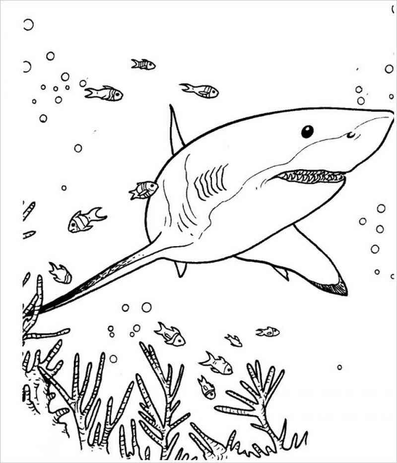 hình ảnh cá mập
